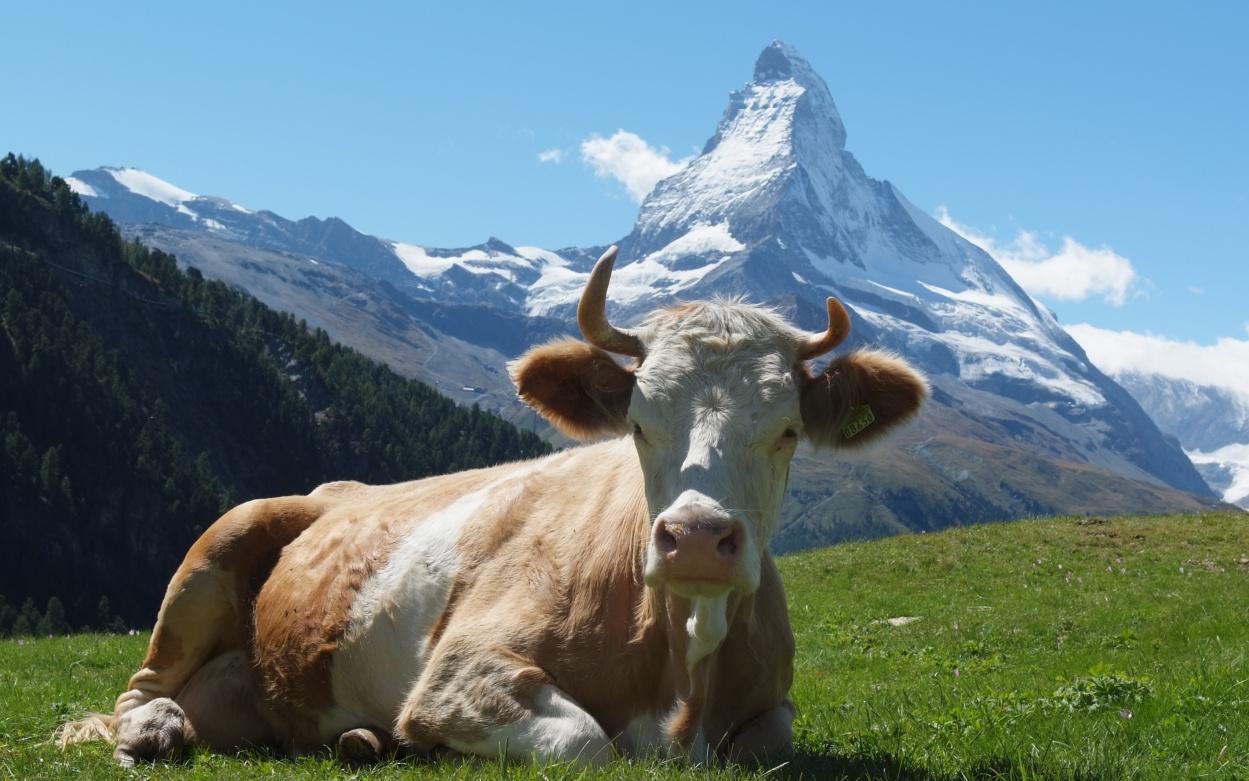 Glacier Express Bilderbuch Matterhorn Zermatt Wallis